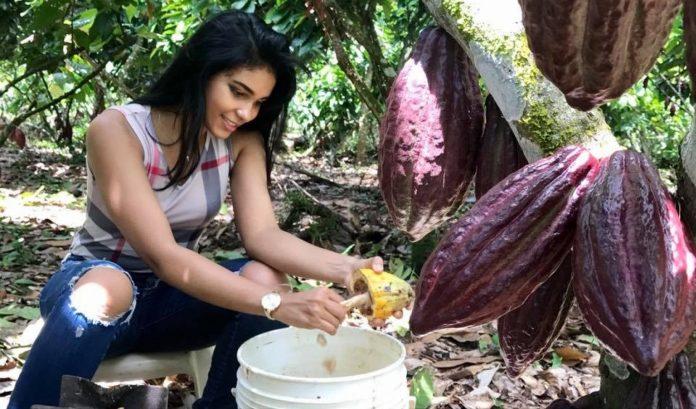 lanzan proyecto para mejorar la productividad, inocuidad y calidad del cacao en Arauca - Noticias de Colombia